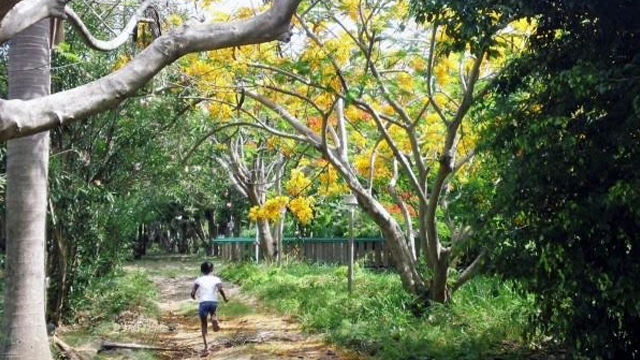 Emilio Wilson Park in St. Maarten Starts New Project